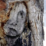 Sad Face in Tree