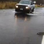 Salmon swim up road