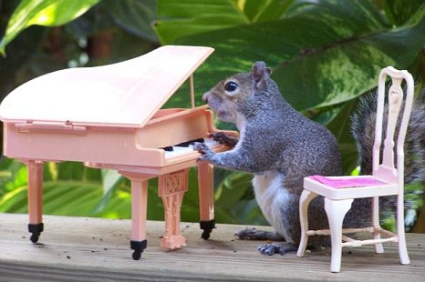 squirrel plays piano