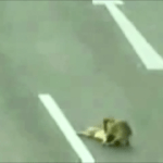 hero_dog_saves_dog