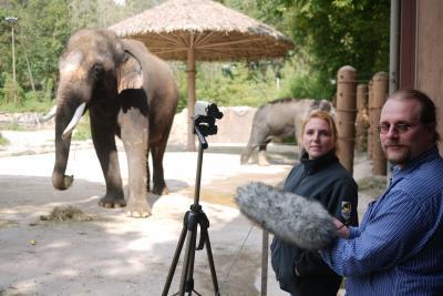 human voice elephant