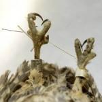 Owl Acupuncture