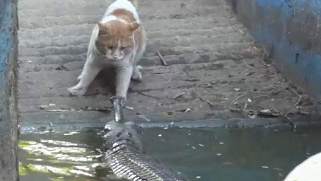 bizarre animal video