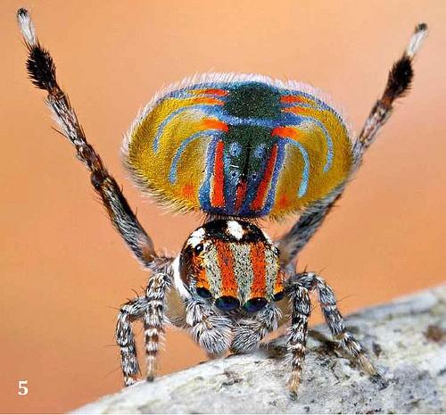 bizarre freaky spider